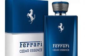 Cedar Essence 3